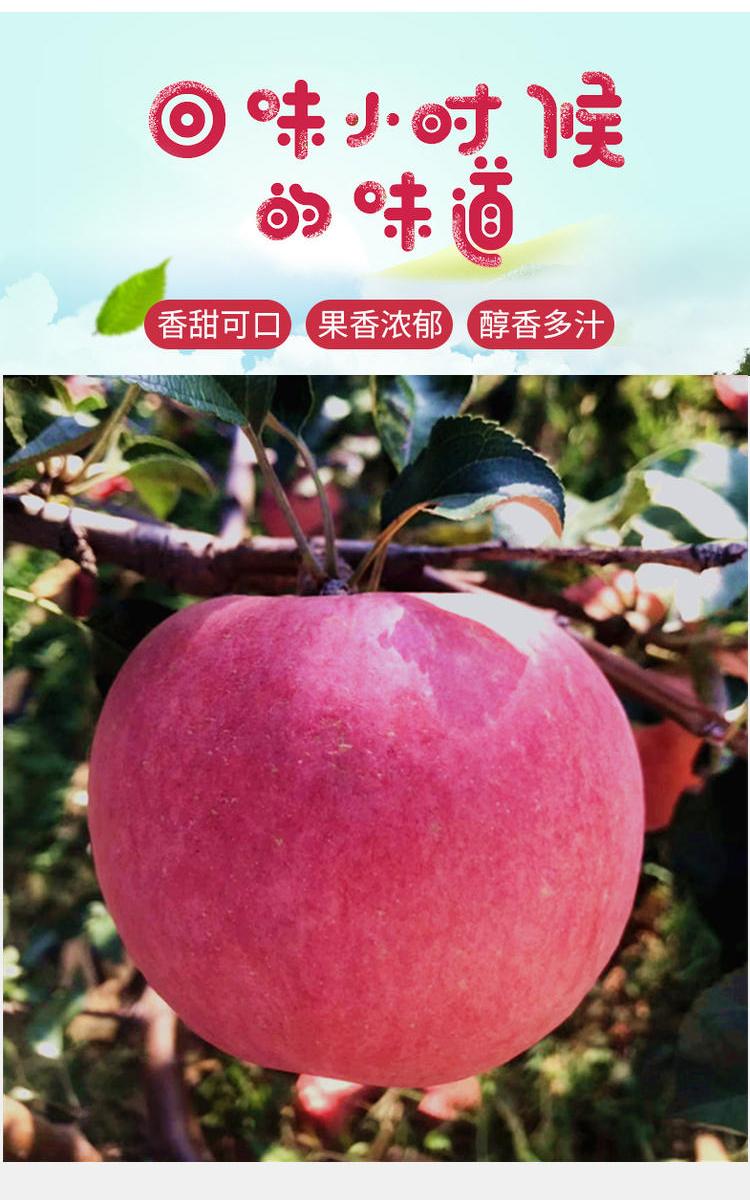 苹果_01.jpg
