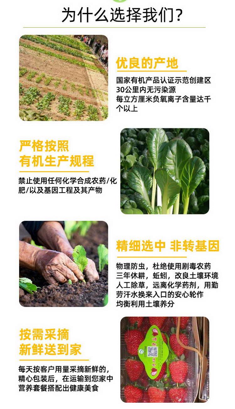 有机蔬菜详情_07.jpg