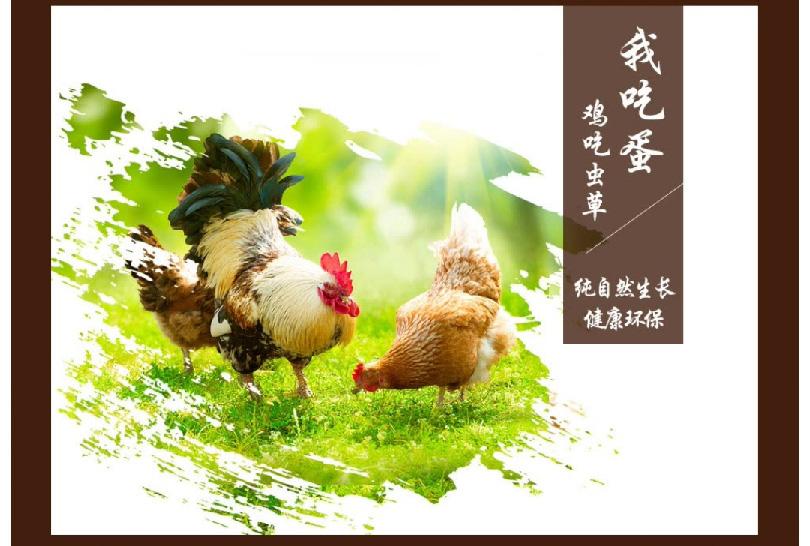 鸡蛋_05.jpg