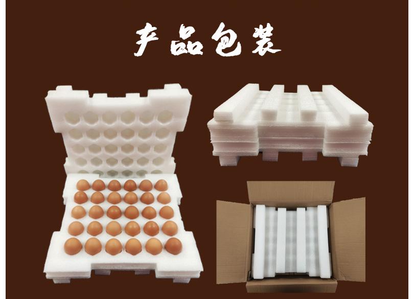 鸡蛋_16.jpg