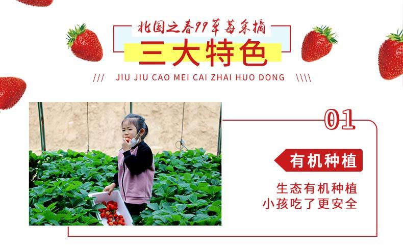 99草莓采摘活动-_02.jpg