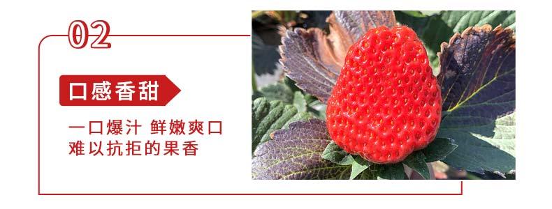 99草莓采摘活动-_03.jpg