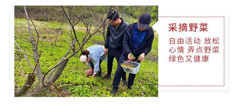 99草莓采摘活动-_12.jpg