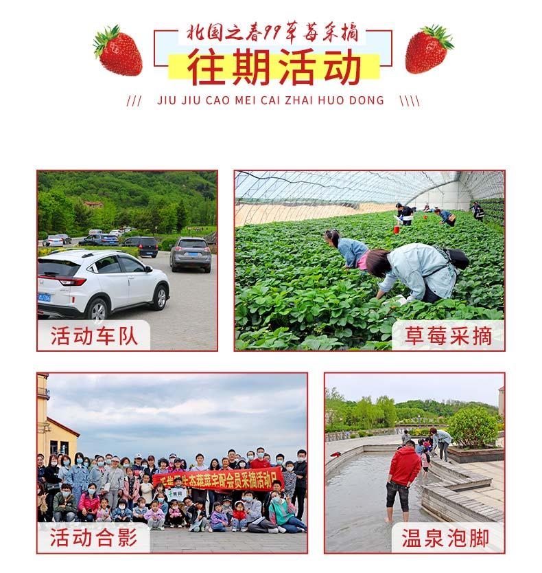 99草莓采摘活动-_14.jpg